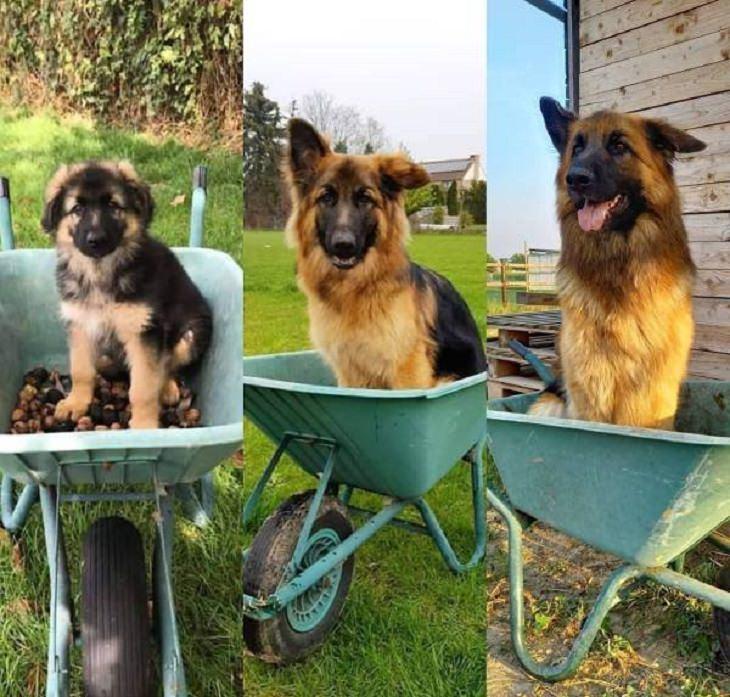 El paso del tiempo medido en años caninos bonitas fotos