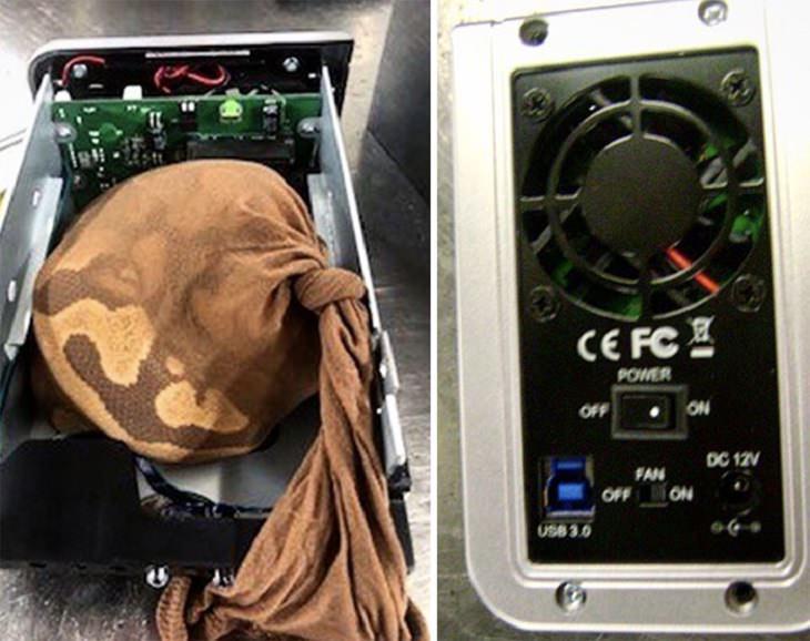 Objetos extraños confiscados en aeropuerto serptiente dentro de bolsa