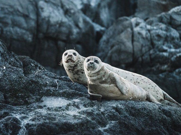 dos focas juntas en una roca