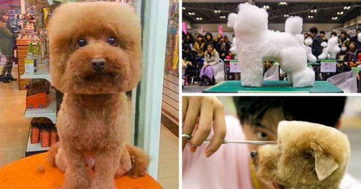 Imágenes Modernidad De Japón corte de pelo en cubo para perros