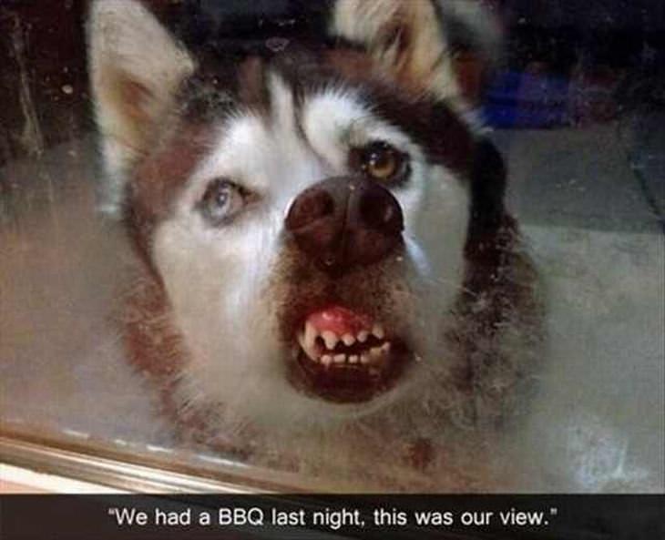 No Verás Esto Animales En National Geographic ...perro enfadado
