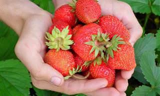 colección 7 posts sobre frutos rojos