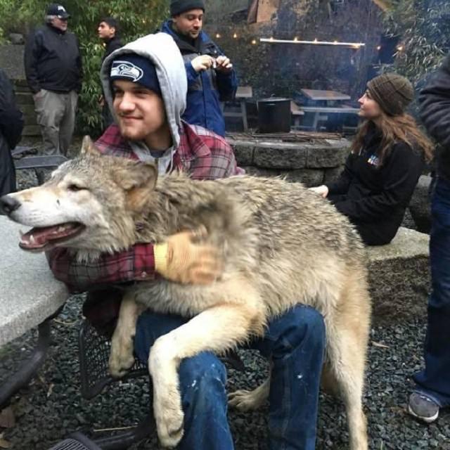 El Lugar En Washington Donde Puedes Convivir Con Lobos Hombre abrazando a un lobo