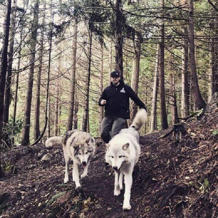 El Lugar En Washington Donde Puedes Convivir Con Lobos Hombre dando un paseo con lobos