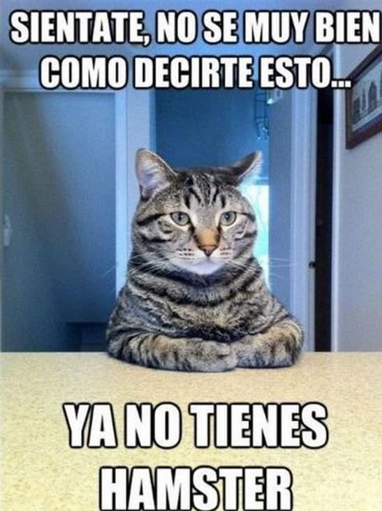 Memes Graciosos De Mascotas Gato ya no tienes hamster