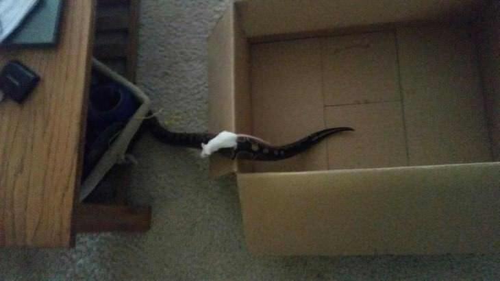 Imágenes de animales trabajando en equipo ratón y serpiente