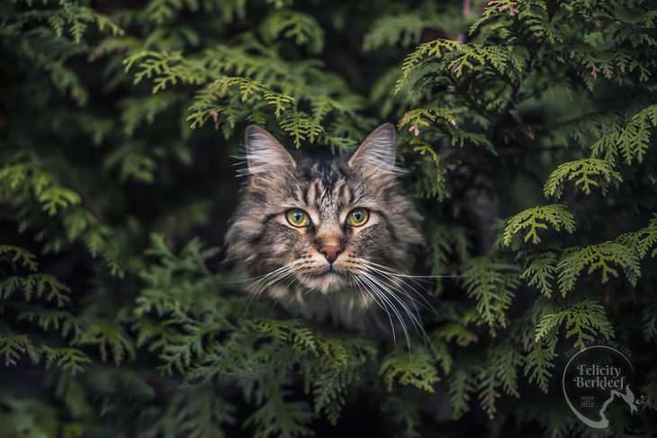 gatos que modelan gato posando en la naturaleza