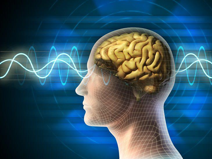 Cómo Mejorar la Habilidad De Tu Cerebro Para Aprender Más