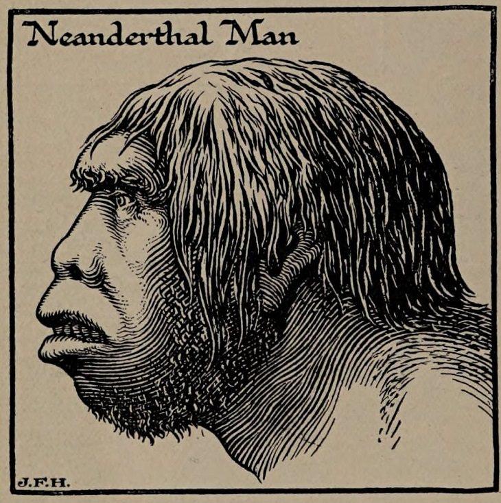 Datos Hombre De Neandertal Neanderthal 1 fue el primer espécimen en ser reconocido como un fósil humano temprano
