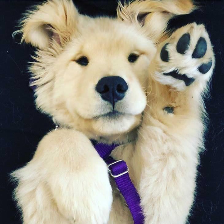imágenes que alegrarán tu día perro saludando