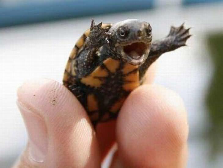 Imágenes que alegrarán tu día tortuga cantando