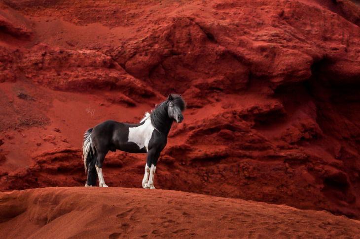 Caballos Islandeses un caballo negro con manchas blancas parado sobre la tierra roja