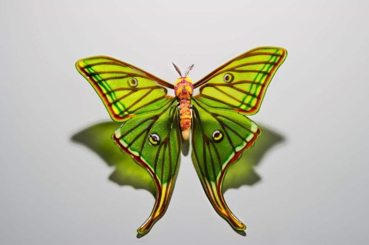 Arte en cristal mariposa isabelina