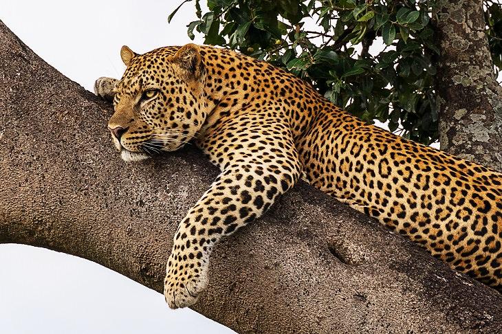 Significado de los sueños comunes animales