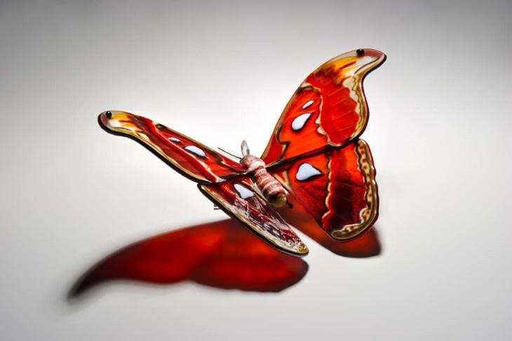 Arte en cristal mariposa atlas