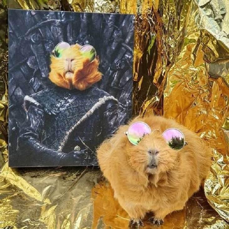 Retratos reales de mascotas ¡Hammy, el líder de los caballeros!