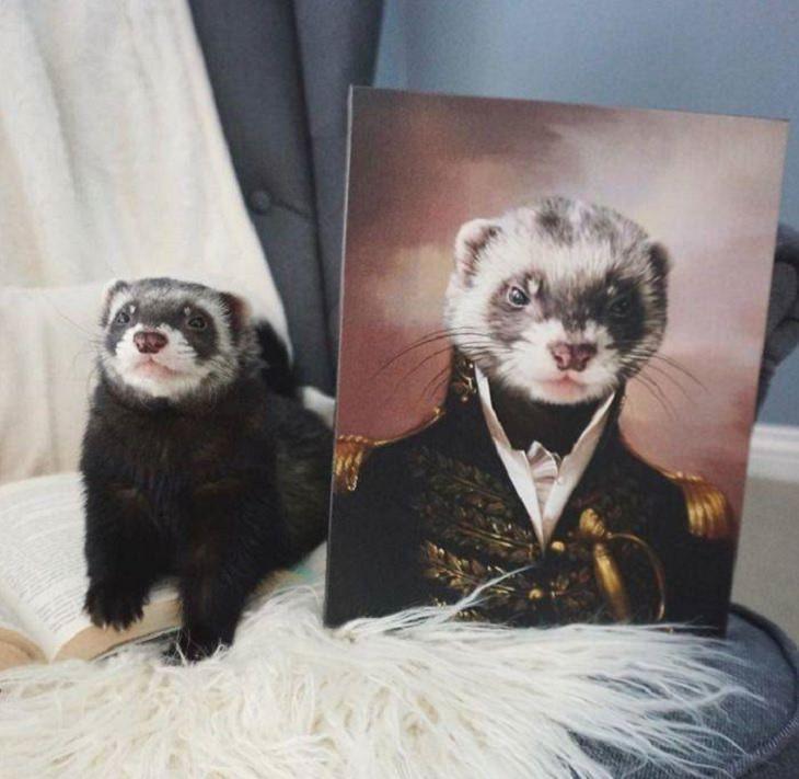 Retratos reales de mascotas comandante hurón