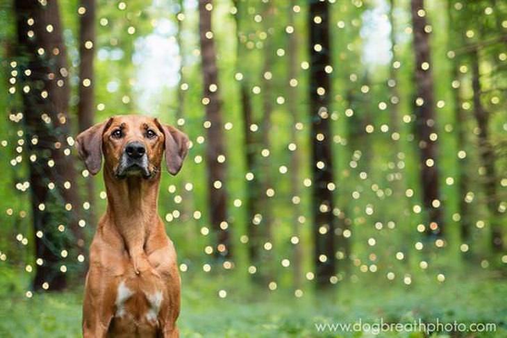 fotos perros como actores holywood