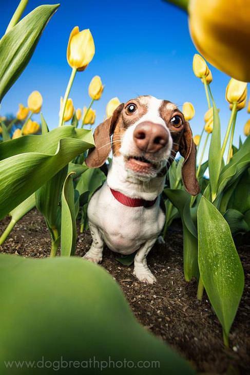 fotos perros como actores holywood perro tulipanes