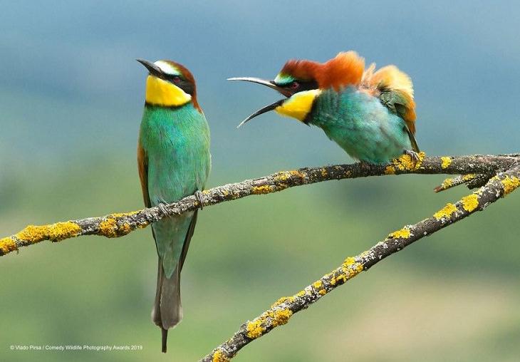 animales divertidos pájaros