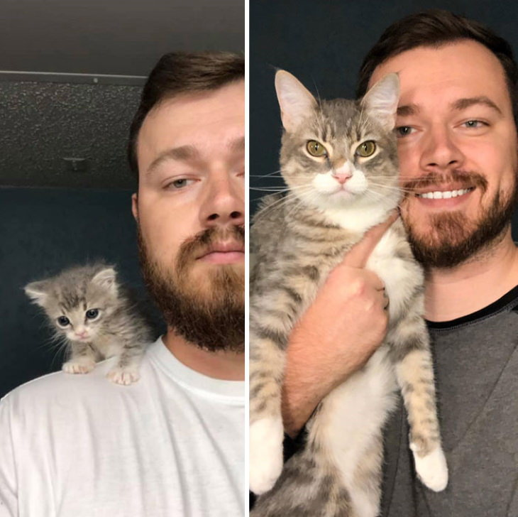 Photos of Kittens Before & After Adoption