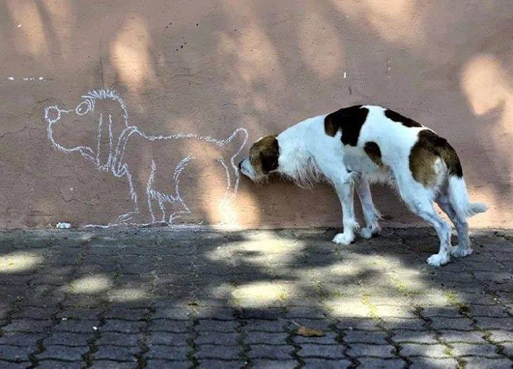 divertidas fotos perros. perro oliendo pipi