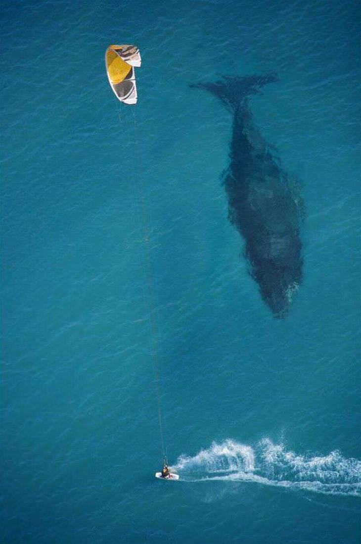 Poniendo en perspectiva el tamaño de una ballena