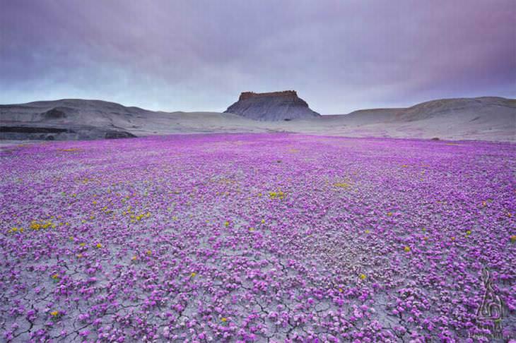 Un mar púrpura en las tierras vacías de Utah