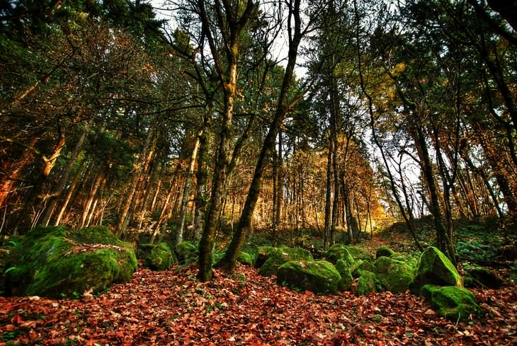 Portland 1. Una caminata por el parque forestal
