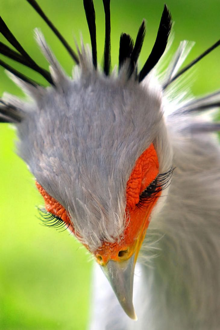 1. The Secretary Bird