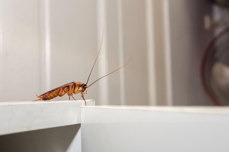 Cómo las cucarachas propagan enfermedades