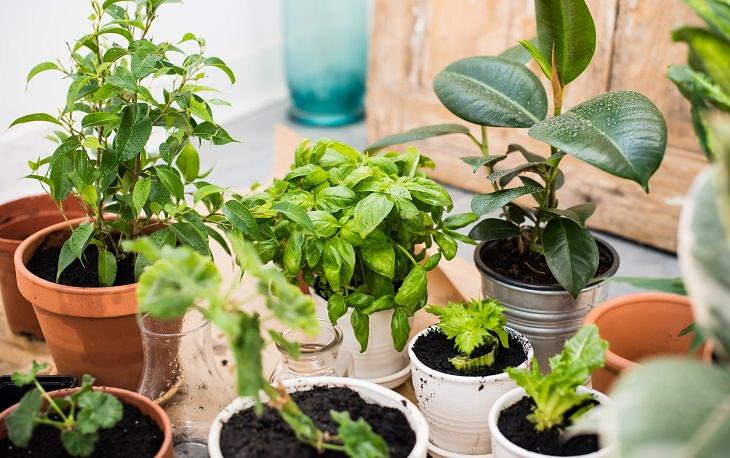 Comprar y mantener plantas de interior