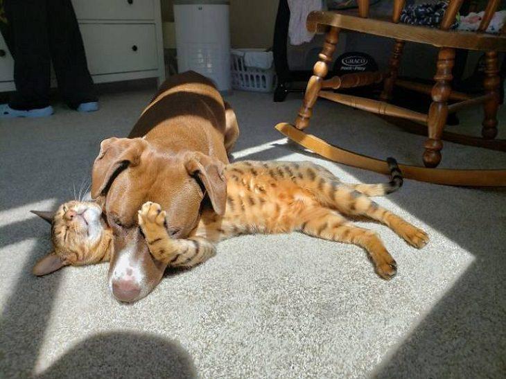 Divertidos Animales Se Relajan Al Sol perro y gato