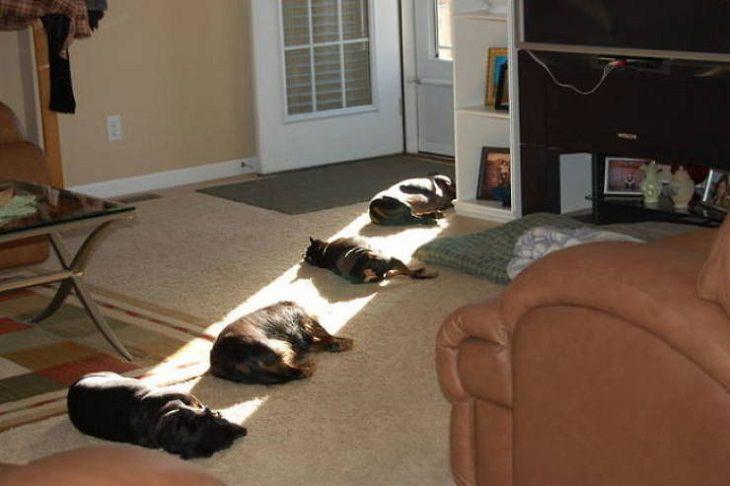 Divertidos Animales Se Relajan Al Sol diversos perros