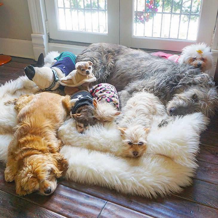 Steve Greig Adopta Mascotas Ancianas Simplemente no podía reponerse