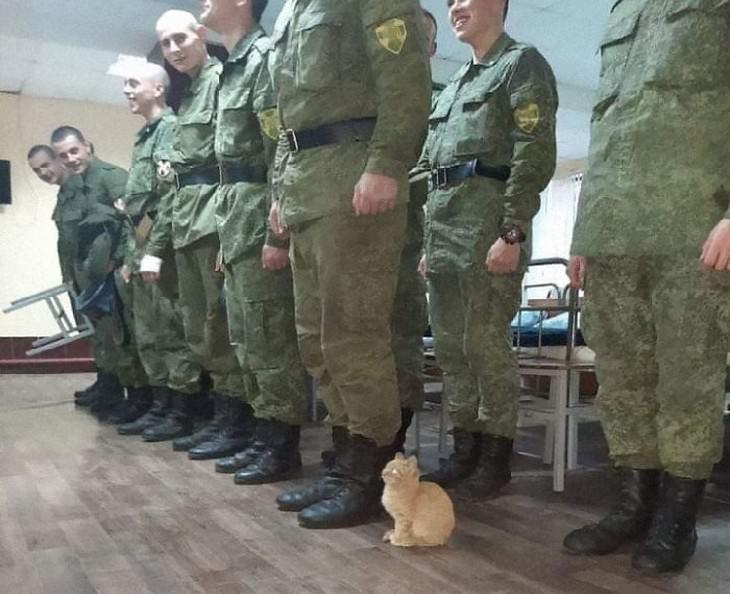 Divertidas Imágenes De Gatitos Para Alegrar Tu Día Gatito en Base Militar