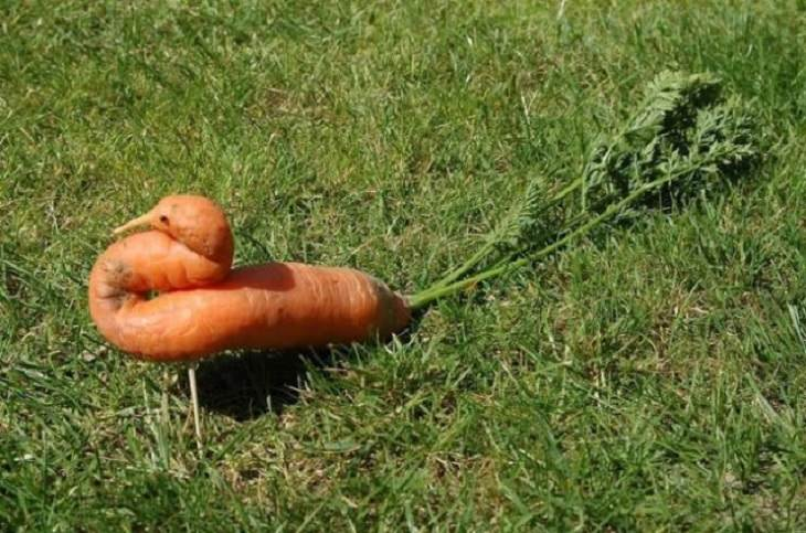 Photographs of odd and bizarre animals, plants, fruits and vegetables that are disguised as other things or have strange appearances, carrot that is shaped like a bird