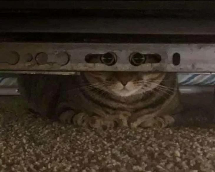 Divertidas Imágenes De Gatitos Para Alegrar Tu Día Gatito escondido