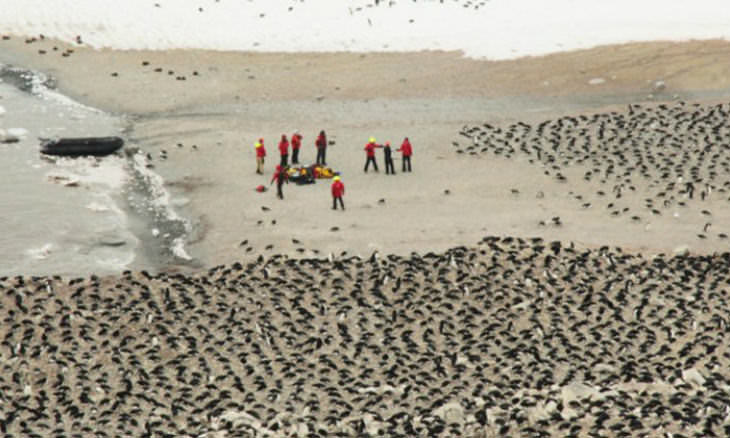 Científicos Descubren Una Enorme Colonia De Pingüinos