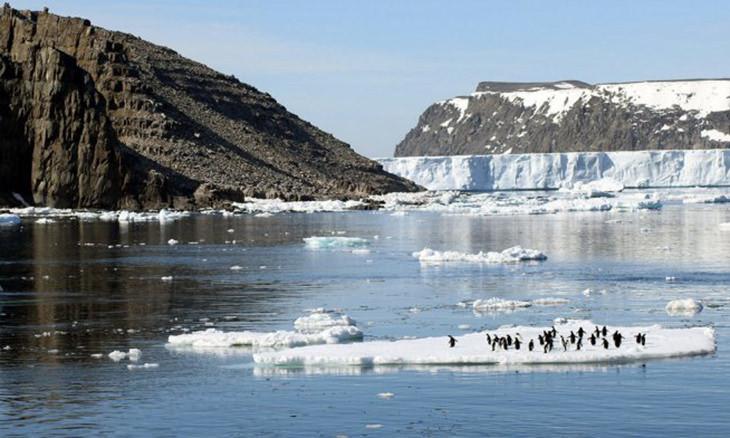 Científicos Descubren Una Enorme Colonia De Pingüinos En La Antártida