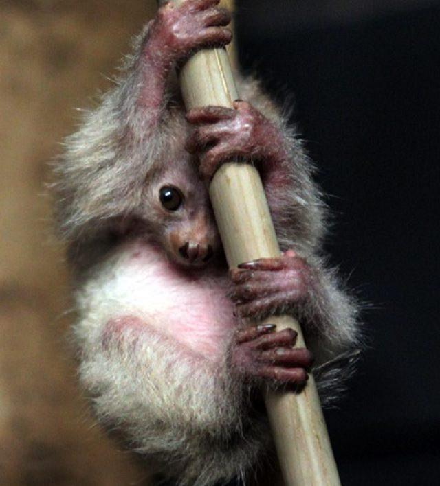 Imágenes de animales bebés raros y hermosos poto bebé