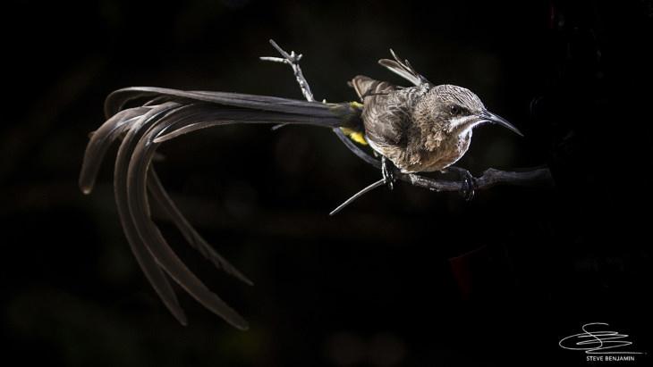 Fotos de aves solares de Steve Benjamin Cabo