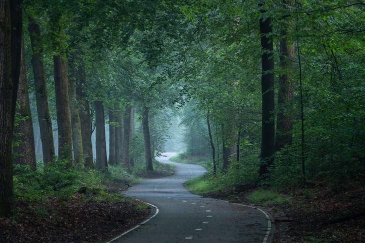 El Fascinante Bosque De Los Países Bajos Captado Por Albert Dros