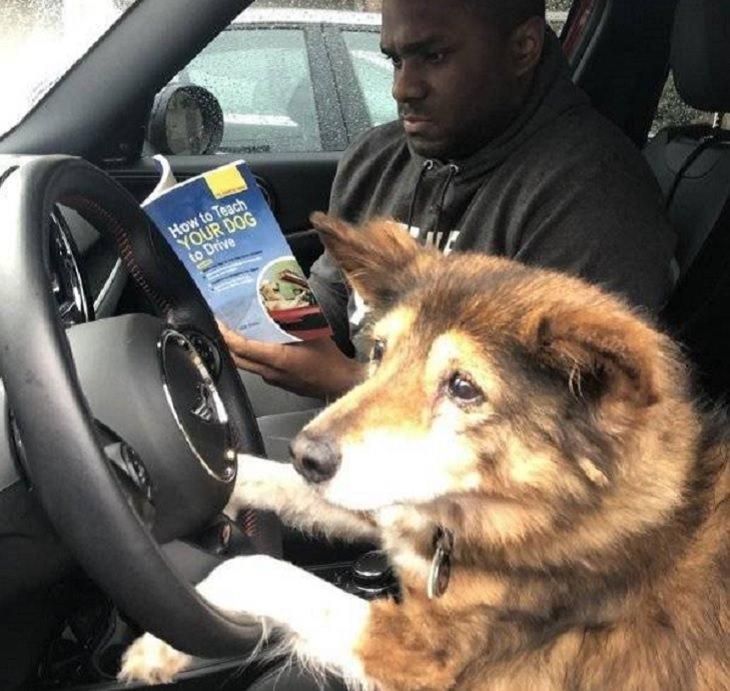 Imágenes De Animales Captadas En Momentos Graciosos perro al volante