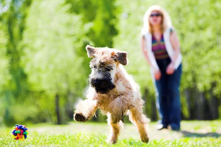 Consigue un perro de alta energía