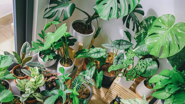 1. Coloca algunas plantas de interior