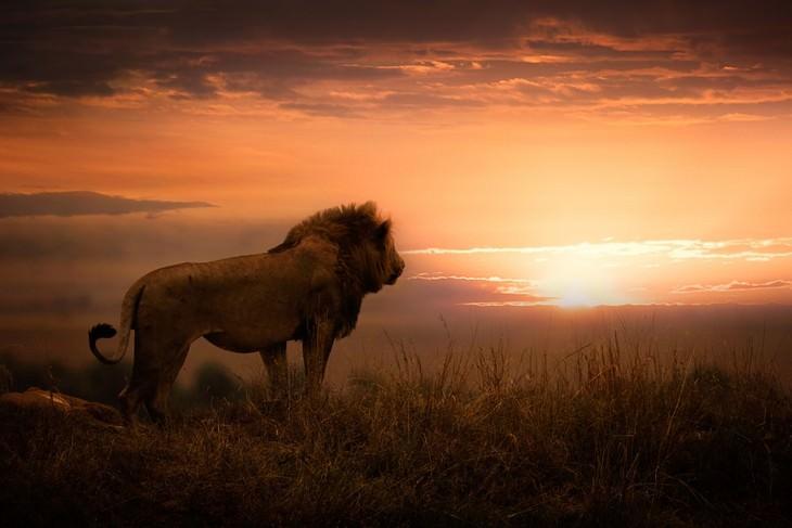 Impresionantes Fotos De Vida Salvaje Con Una Buena Causa león