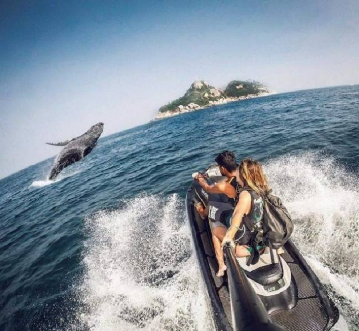 Brillantes Fotos De Los Humanos y La Naturaleza En Armonía ballena y humanos