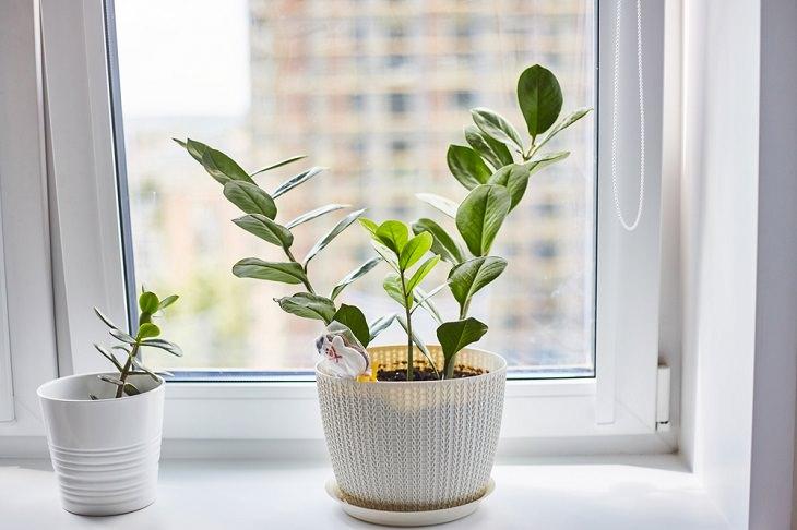 8 Consejos Para Ordenar Tu Dormitorio Elimina las plantas adicionales que congestionan los alféizares de las ventanas de tu dormitorio