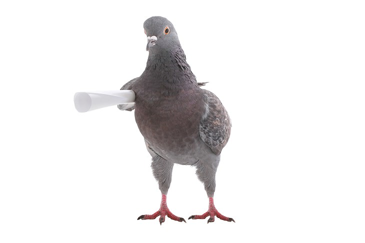 10 Animales Que Tuvieron Un Gran Impacto En La Historia Mundial La paloma que salvó a cientos de tropas estadounidenses